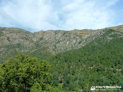 Pinares de la Angostura en Piedralaves;rutas en la pedriza la horizontal